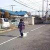前橋市 渋川市 犬のしつけ ルテア教室の画像