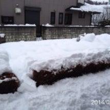 異次元の大雪で静かな…