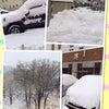 この大雪には参りますの画像