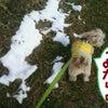 雪遊びの画像
