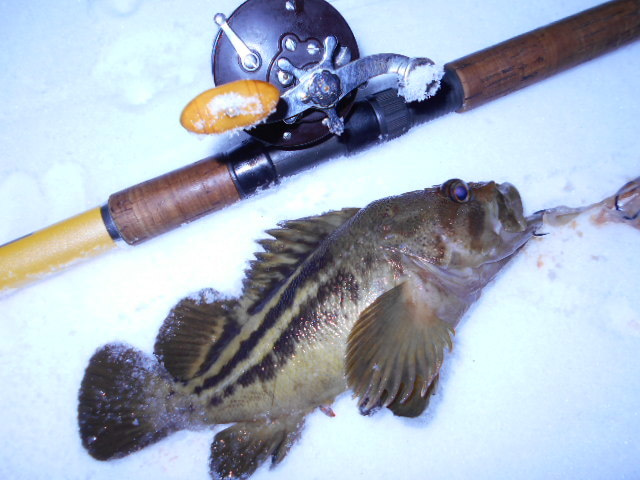 イカワタでドボン十六夜 大雪が止んだ間隙を縫って釣りましてございます。の記事より