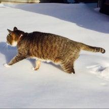 番外編 お隣猫さん