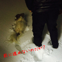 雪の夜のお散歩は辛か…