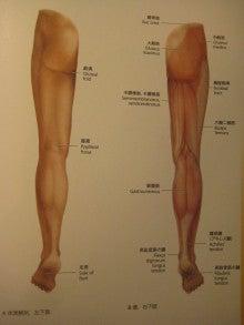 臀筋とハムストリング