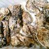 殻つき牡蠣と誕生日の画像