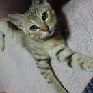 猫探してます!!の記事より