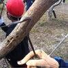 柿の栽培学習の画像