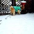 (´・ω・`)雪の日…
