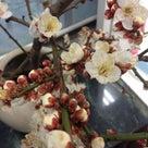 おはようございます。朝、窓を開けたら風が春の匂い。梅の香りに心がウキウキします!の記事より
