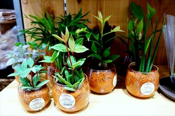 壁にかけられる観葉植物 15×10cm