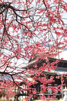 春の興正寺