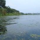 【琵琶湖 オカッパリ釣行】 <帰帆島> 名物『ウィードジャングル』!フロッグ大遠投(45cm!)の記事より
