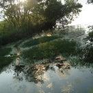 【琵琶湖 オカッパリ釣行】 <葉山川周辺> やっぱり夏はパンチング!(51cm!)の記事より