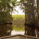 幻想的な世界へ!レンタルボート釣行 (キャドー・レイク/テキサス州)の記事より