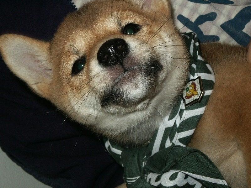小さい時からヴェルディ応援犬たまのちゃん