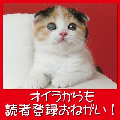 吉祥寺 シータヒーリング
