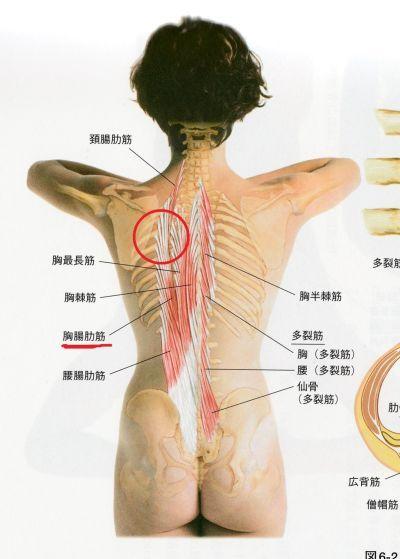 の 痛み 甲骨 左肩