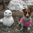 ミルフォニー+DOG…