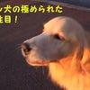 【動画】サイレン犬&すごいファイティング態勢の子猫の画像
