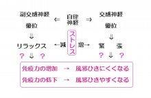 自律神経と風邪_阪神西宮_鍼灸院
