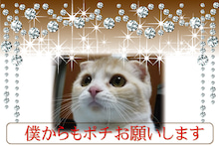 【新宿 マインドブロックバスター】poti01