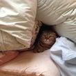 I'm sleepy…