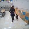 太田市 館林市 犬のしつけ カインズ大泉店の画像