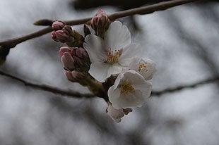 一部の木々では開花がありました
