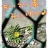 ちいさい春、みっけ~♪の画像