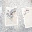 大阪ネズミ