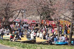 桜まつり会場に設置されたステージ
