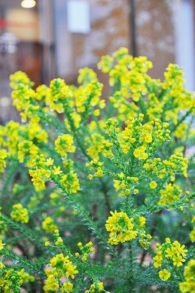 140326_flower2