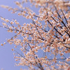 ムーンセラピー 〜牡羊座の新月〜の画像