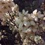桜とホヌとWings…