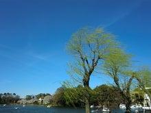 青空と枝垂れ柳