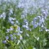 春便りの画像
