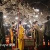円山公園の夜桜の画像