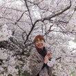 桜、さくら、SAKU…