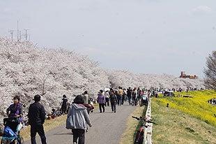 荒川沿いの土手には多くの花見客が訪れmした