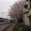 懐かし!井の頭公園・三角広場!の画像