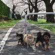 *桜とお誕生日*