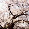 春爛漫!文楽観劇とバースデーディナー♪の画像