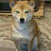 癒し犬の画像
