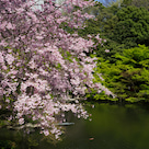 桜間に合いました~♪の記事より