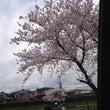 京都の車窓から(笑)