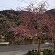 京都の車窓から第二弾…