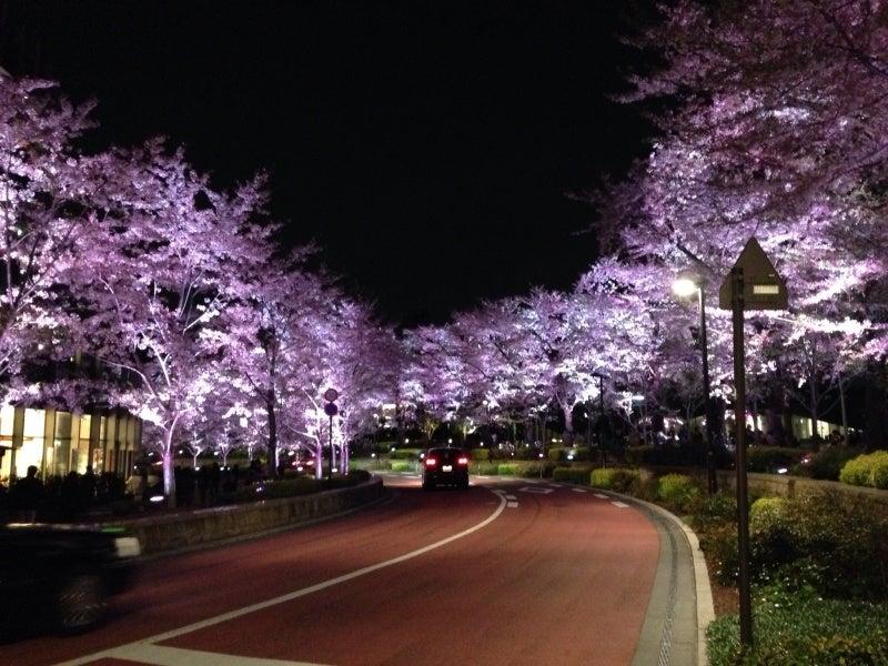 【麻布グリップ】ミッドタウンの桜①