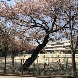画像 桜 の記事より