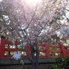 住吉大社に咲く花々の画像