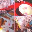 春ランラン\( ˙∇…